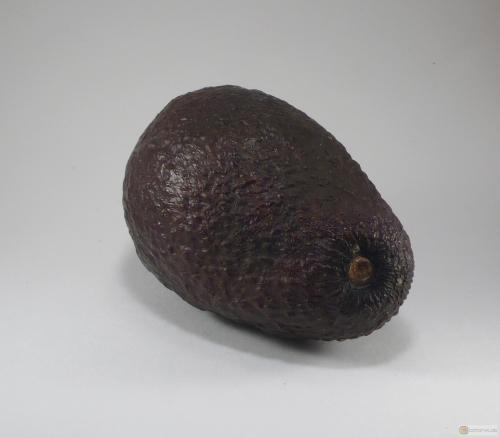 Persea americana -- Avocado